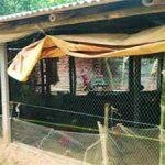 করোনা আক্রান্ত দম্পতি গ্রামছাড়া, ঠাঁই হলো মুরগির খামারে